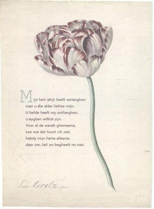 Afbeeldingen van Plint 10 poëziekaarten plint met gedicht 'Mijn hert'
