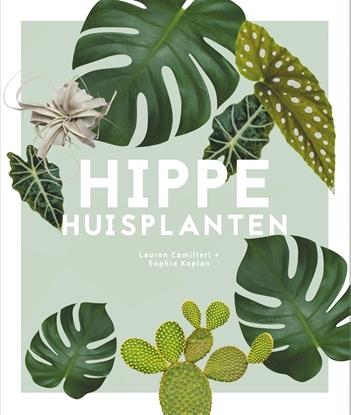 Afbeeldingen van Hippe huisplanten