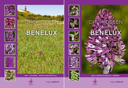 Afbeeldingen van Orchideeën van de Benelux