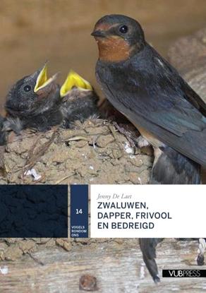 Afbeeldingen van Zwaluwen, dapper, frivool en bedreigd