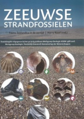 Afbeeldingen van Zeeuwse strandfossielen